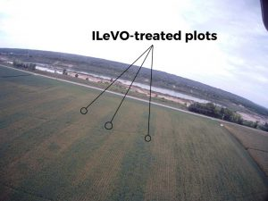 Aerial photo showing difference between ILeVO-treated and non-treated plots.