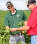 examining soy beans