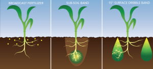 Three-panel graphic of corn plant spreading roots into fertilized areas of the soil
