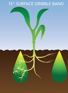 A visual of liquid fertilizers being applied with the dribble band method.