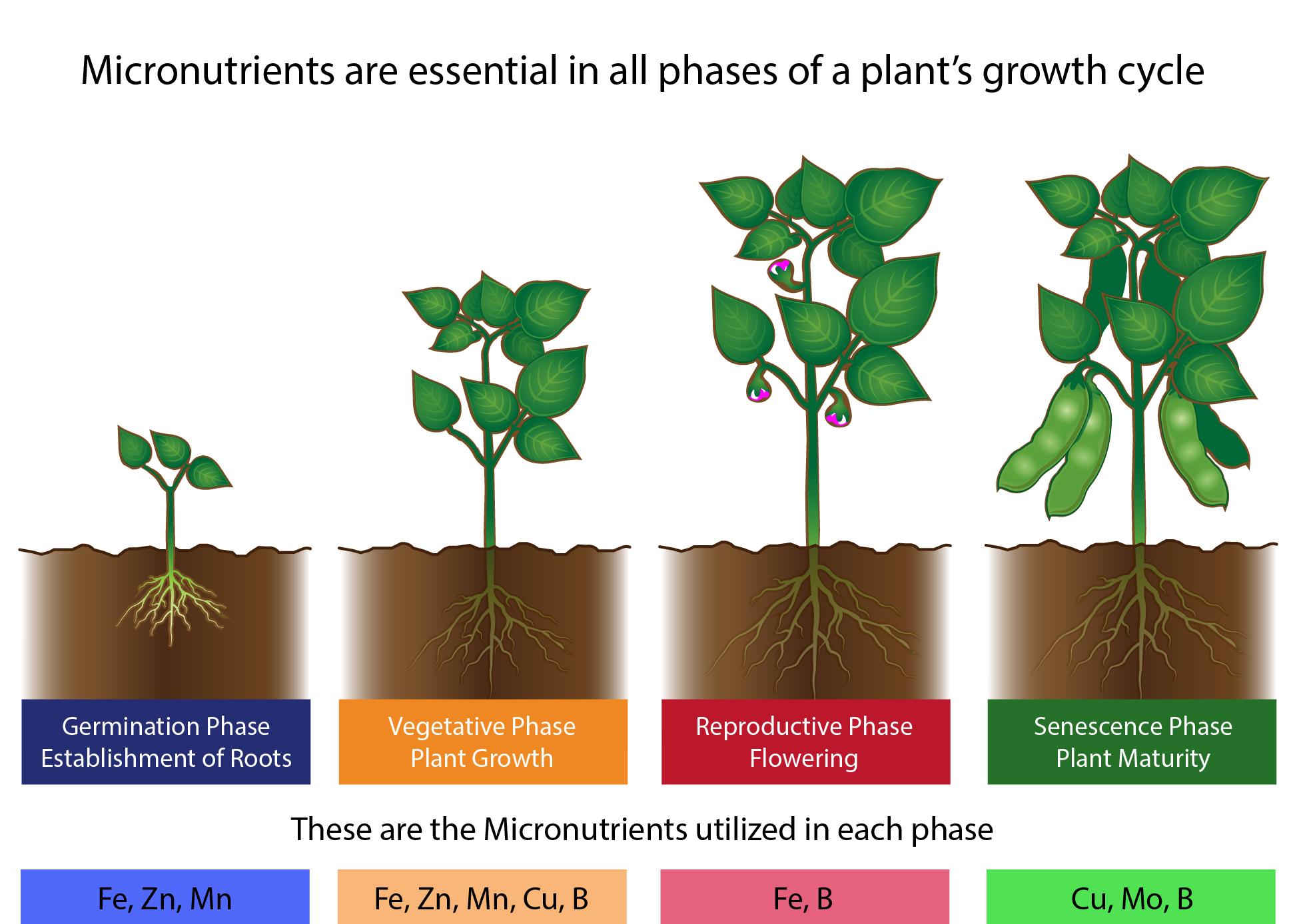 Types Of Fertilizers Liqui Grow Balanced Liquid Fertilizers