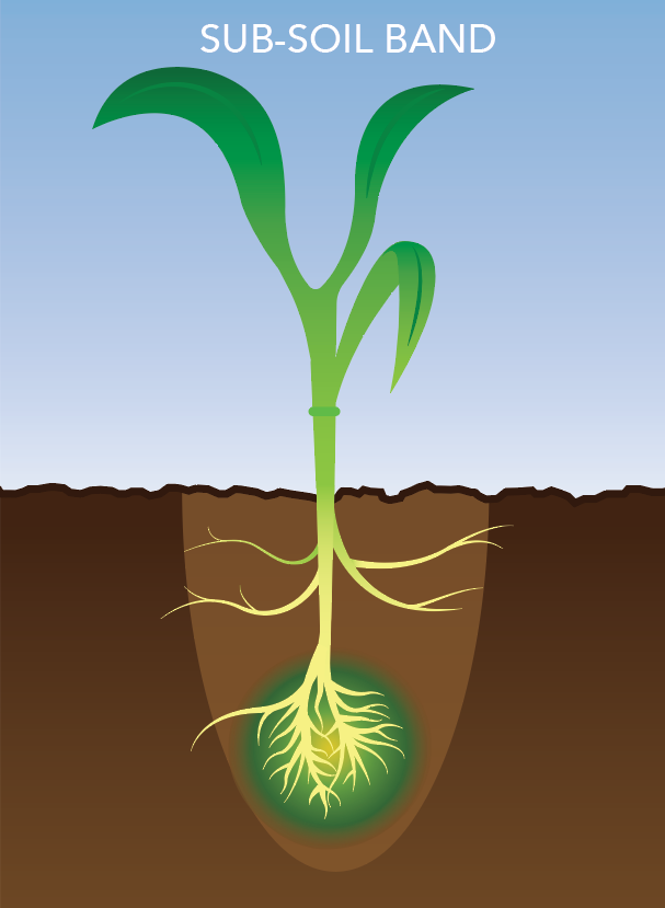 A visual of fertilizer being applied with the sub-soil band method.