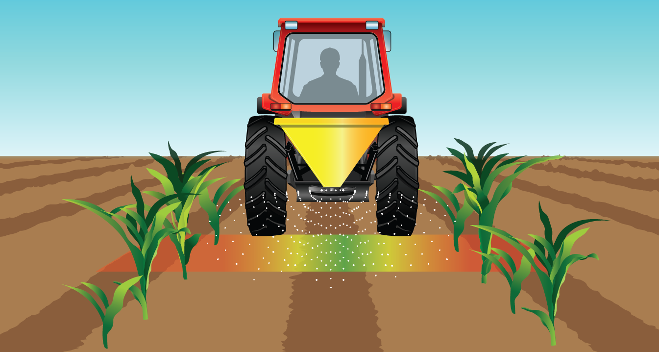 A visual of how urea is spread in a field with plants